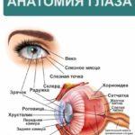 плакат анатомия глаза