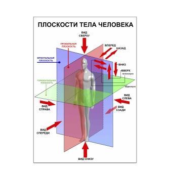 Плакат плоскости тела человека