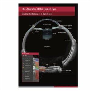 плакат анатомия человеческого глаза